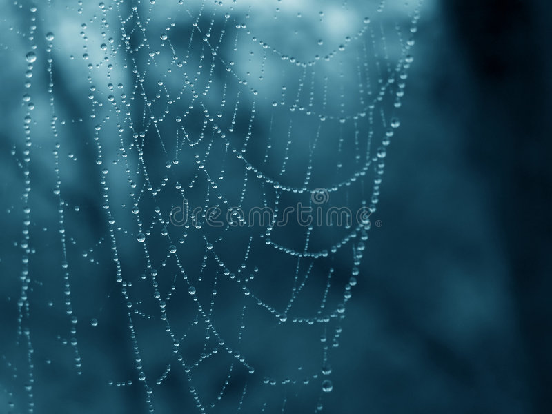 Cobweb royalty free stock image