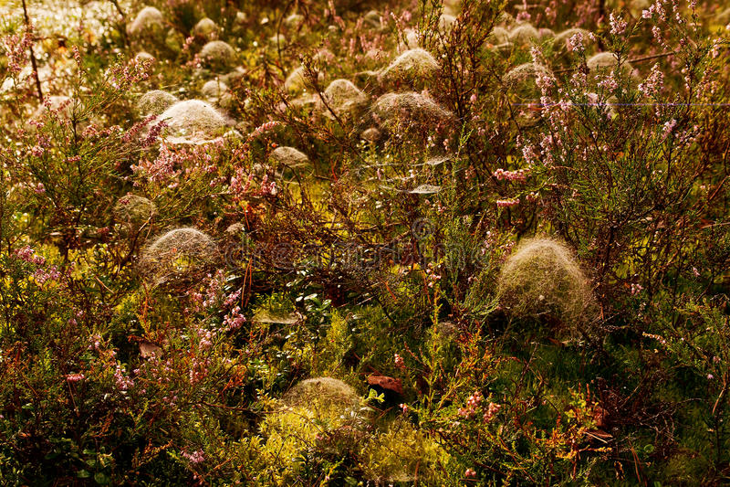 Cobweb in the autumn forest