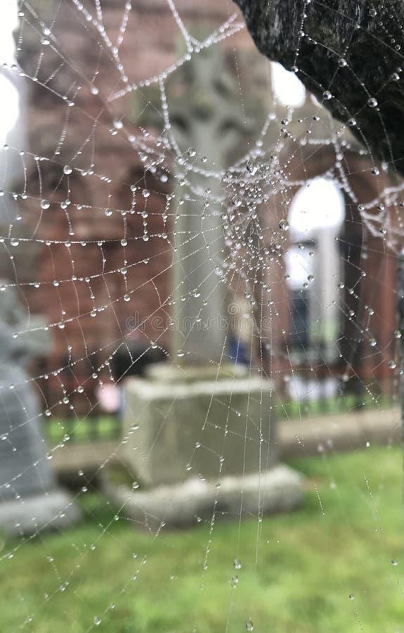 Cobweb avec gouttes de rosée photos libres de droits