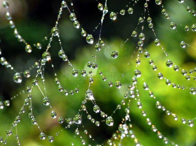 Cobweb bagnato fotografie stock libere da diritti