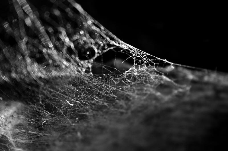 Cobweb on a black background stock images