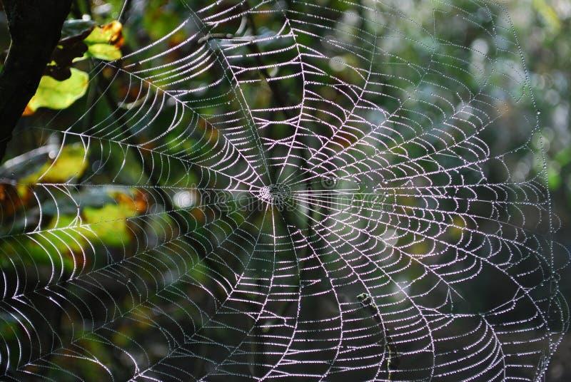 Download Cobweb imagem de stock. Imagem de manhã, cobweb, nave - 29829637