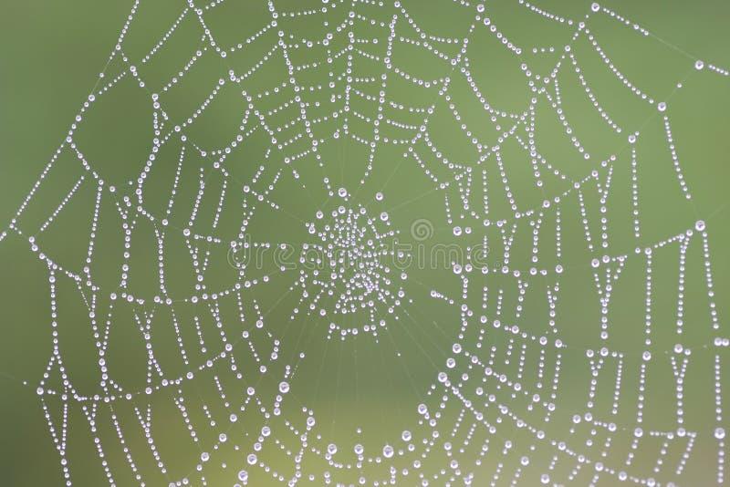 Cobweb Dewy fotografia stock