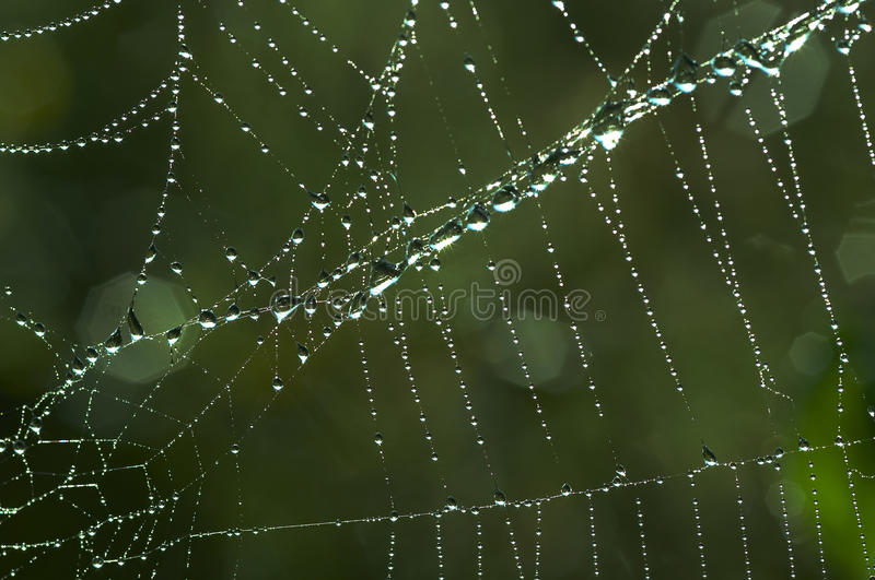Download Cobweb With Glistening Dewdrops Stock Image - Image: 11446691