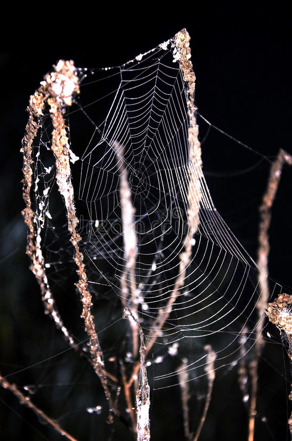 Cobweb on the grass close-up on a black background at night royalty free stock photos