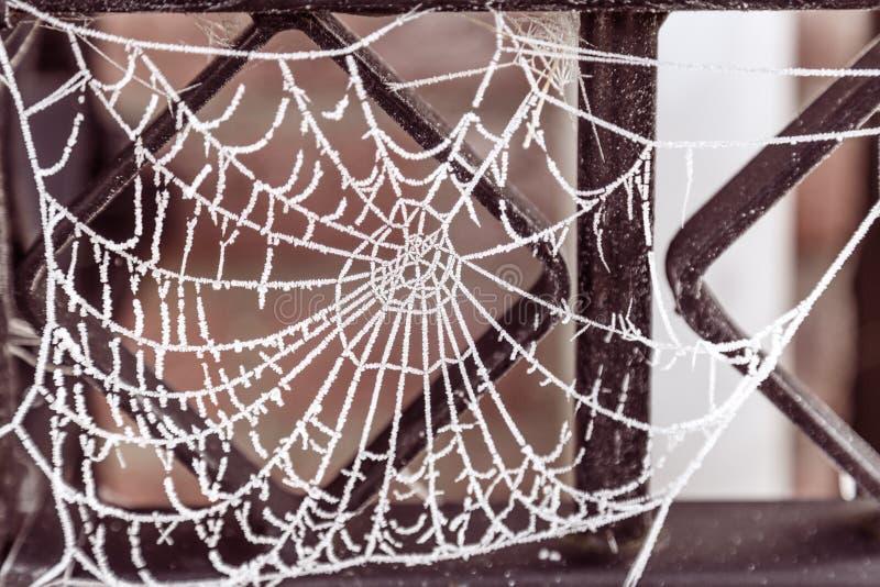 Cobweb med frost royaltyfria bilder