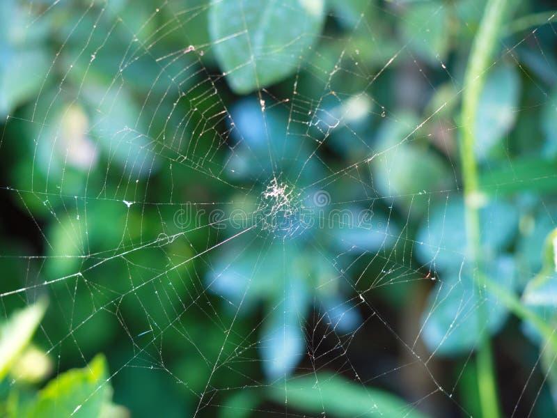 Cobweb immagine stock libera da diritti