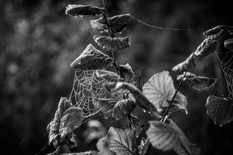 Cobweb spiderweb, ασπρόμαυρο στοκ φωτογραφία με δικαίωμα ελεύθερης χρήσης