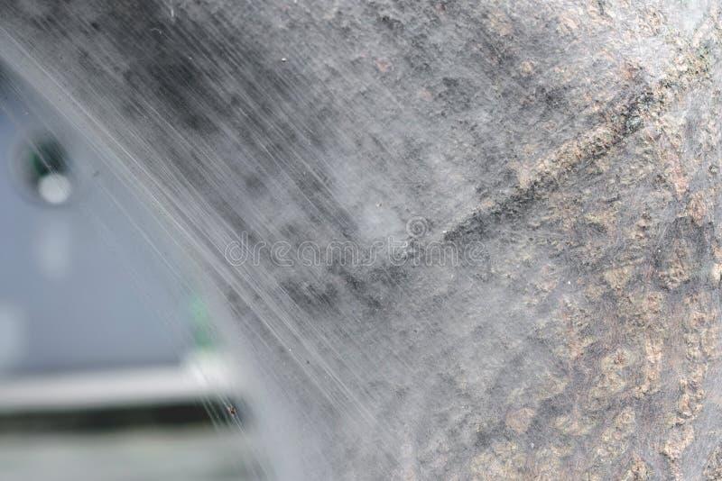 Cobweb su albero di mango fotografie stock libere da diritti