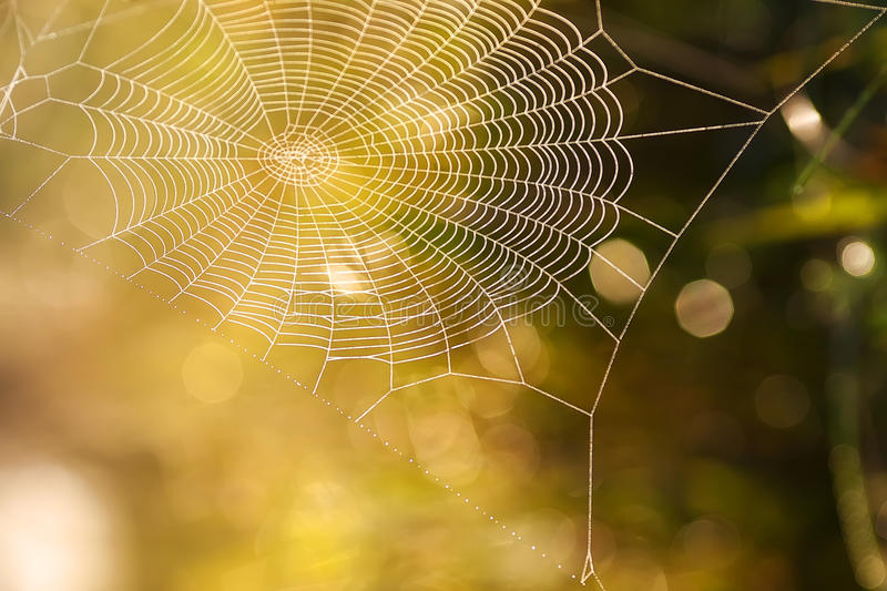 Download Cobweb summer stock photo. Image of flora, insects, grass - 26604802