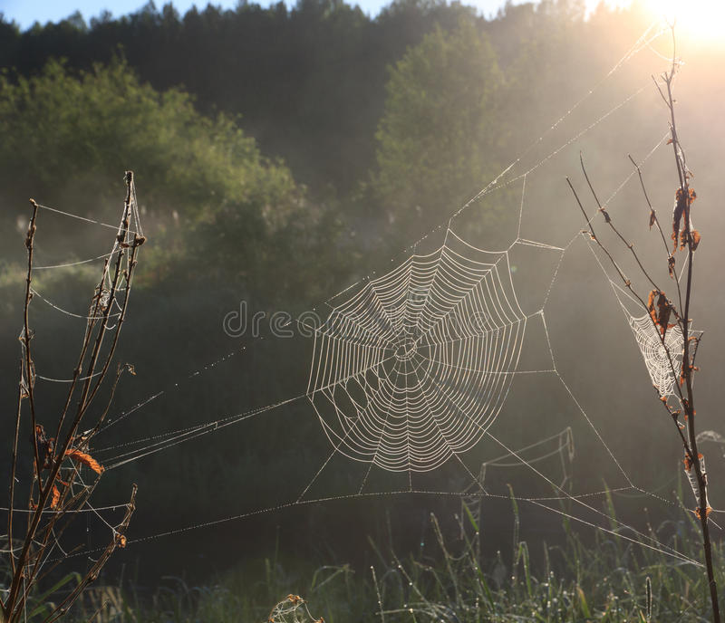 Download Cobweb in the sunlight stock image. Image of intricacy - 25477483