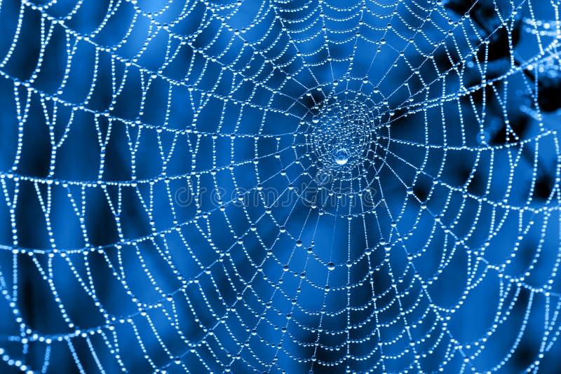 Cobweben med dagg tappar arkivfoto