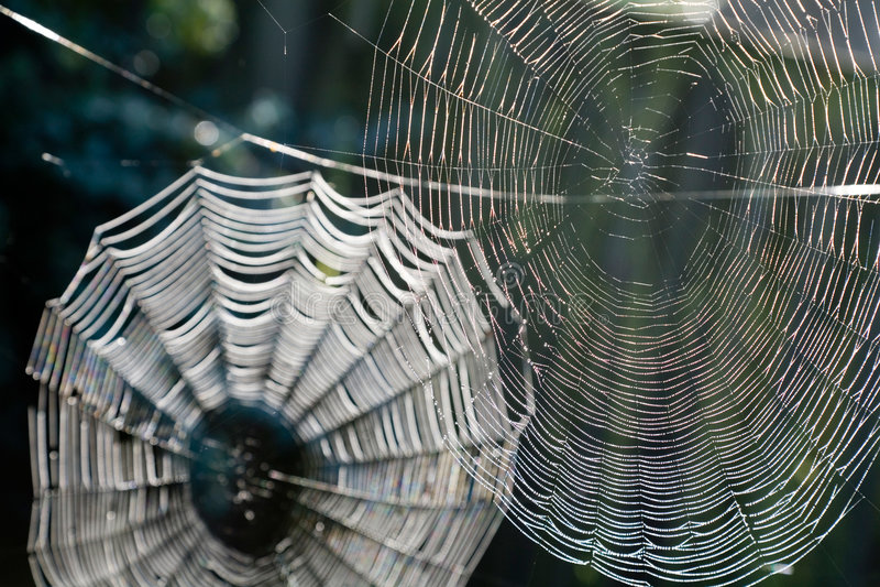 Cobwebs immagine stock libera da diritti