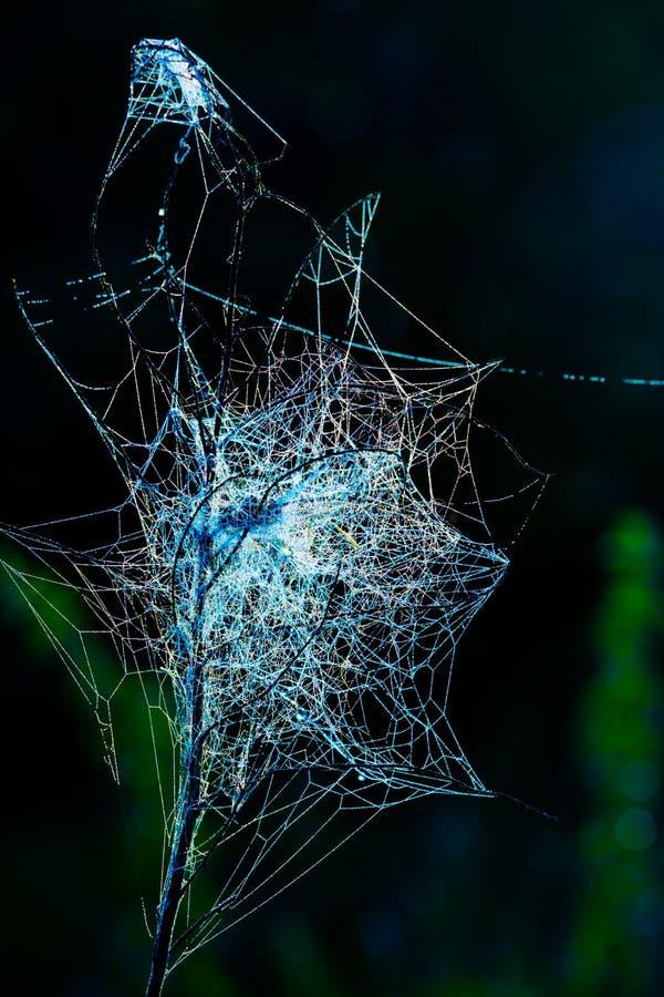 cobwebs photo stock