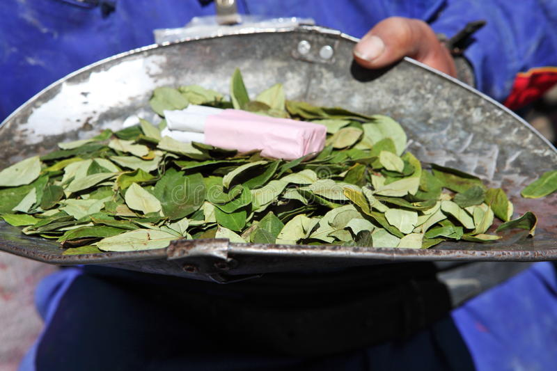 Coca leaves for sale royalty free stock images