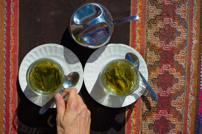 Coca leaves tea known as royalty free stock images