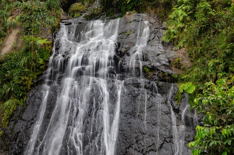 Coca Waterfall in Gr Yunque stock foto