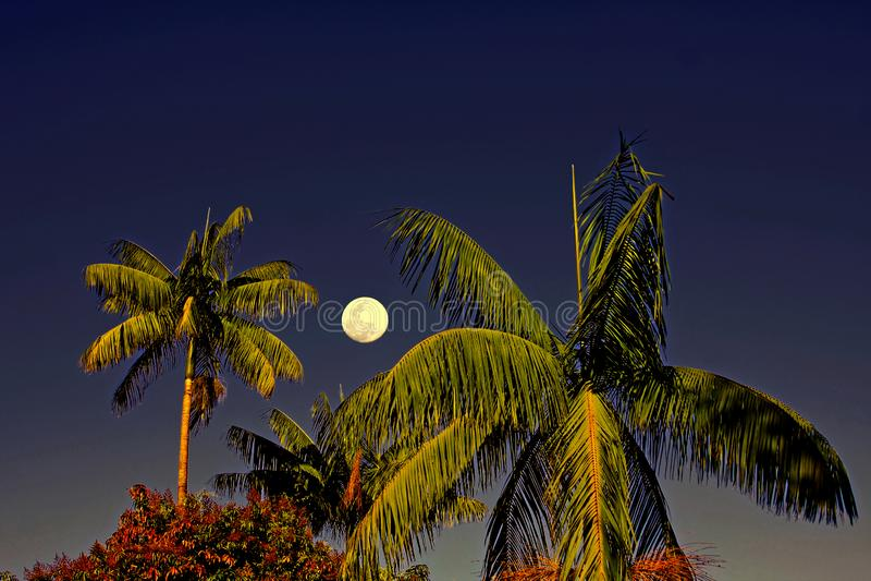 Cocchi incorniciati dalla luna piena immagini stock libere da diritti
