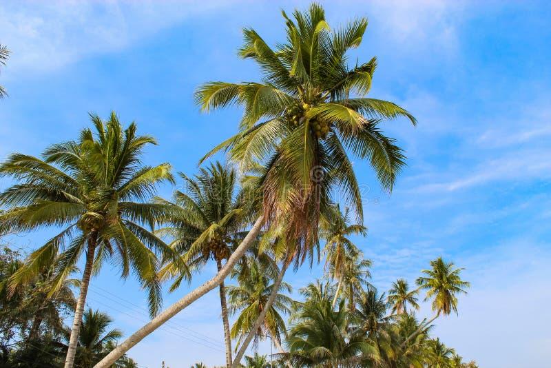 Cocchi sulla spiaggia per l'estate immagine stock