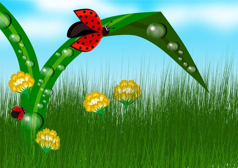 Coccinella nel fondo dell'erba illustrazione vettoriale