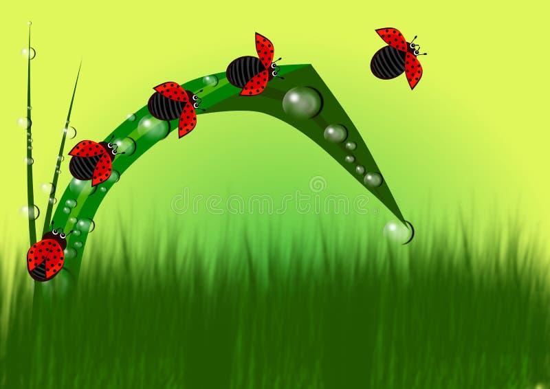Coccinella nel fondo dell'erba royalty illustrazione gratis