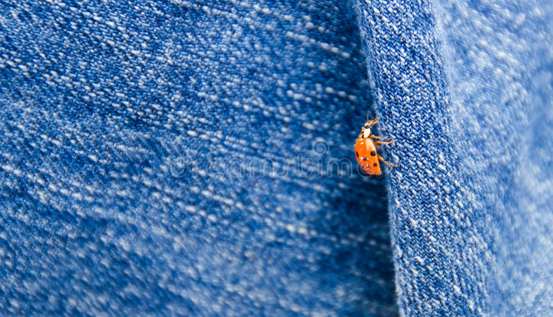 Coccinella sui jeans fotografia stock libera da diritti