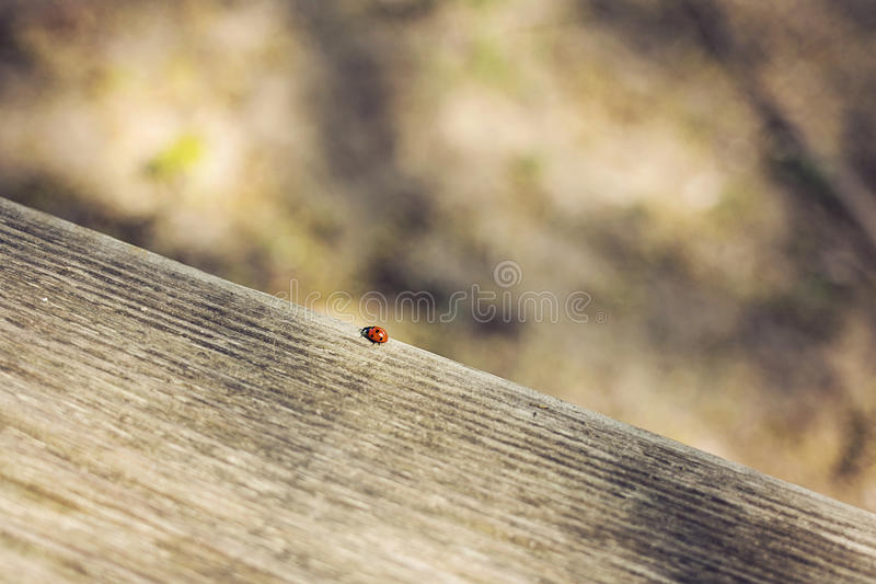Download Coccinelle image stock. Image du coccinelle, outside - 45363525