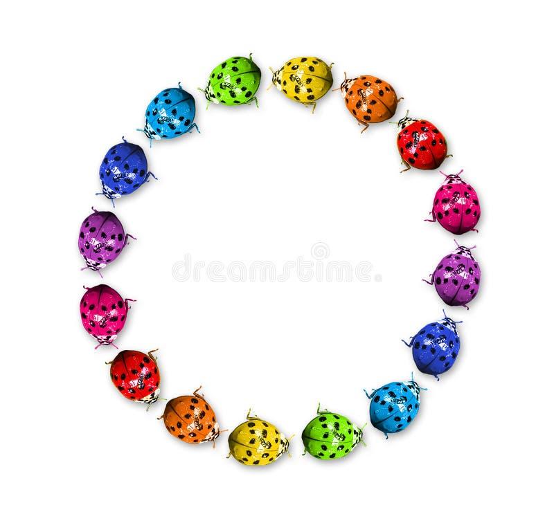 Coccinelle dell'arcobaleno nell'anello fotografia stock libera da diritti