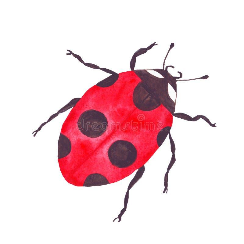 Coccinelle lumineuse rouge de scarabée d'insecte de coccinelle d'aquarelle illustration de vecteur