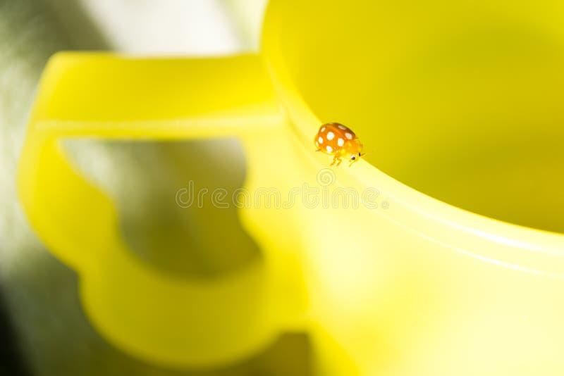 Coccinelle orange se reposant sur une tasse jaune en plastique photos libres de droits