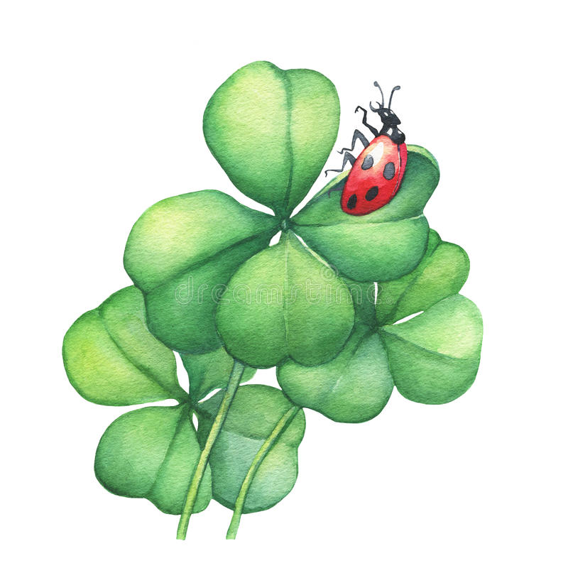Coccinelle se reposant sur un trèfle vert de quatre feuilles illustration stock