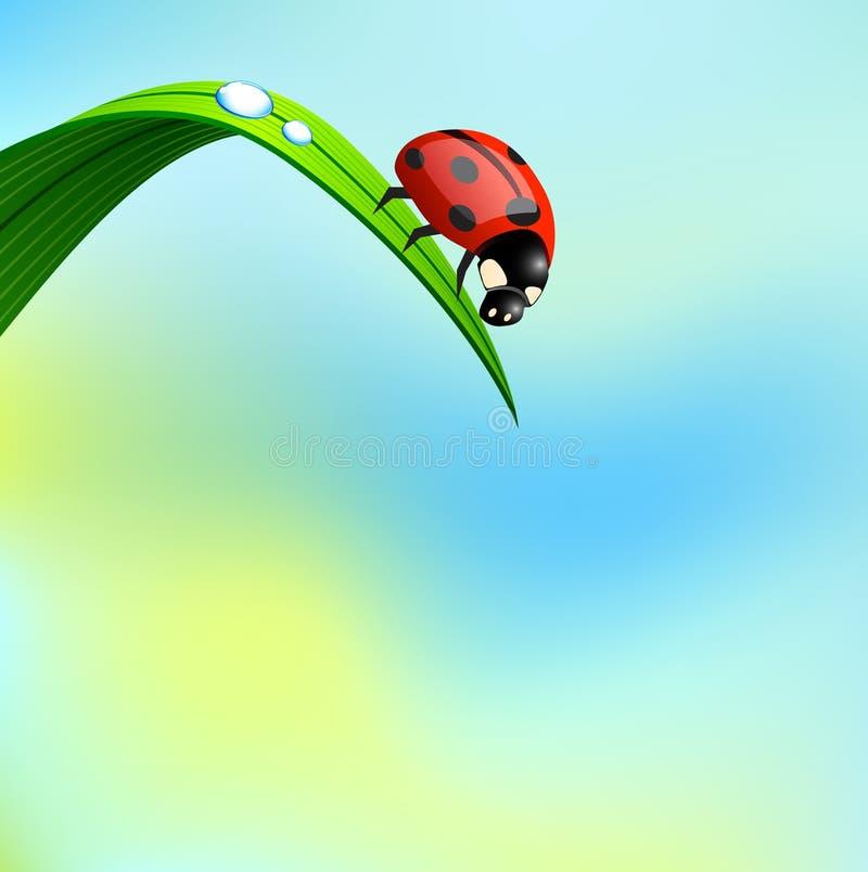 Coccinelle sur l'herbe. illustration stock