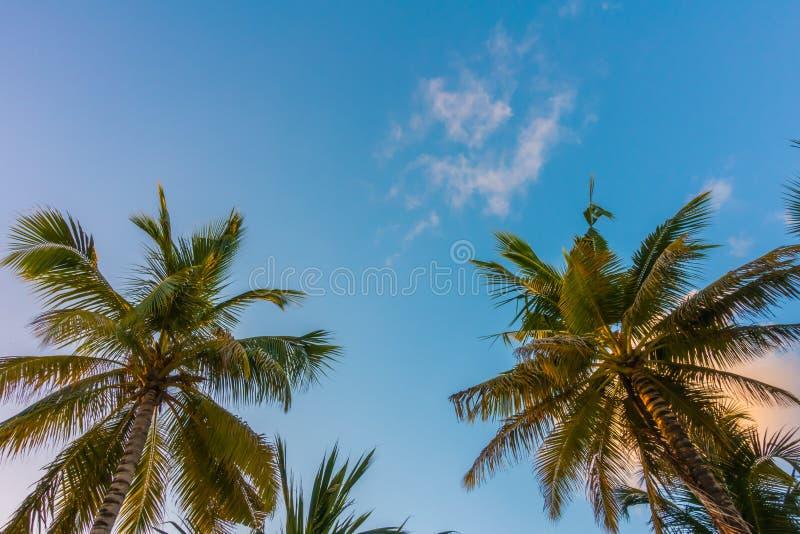 Cocco sopra cielo blu immagine stock