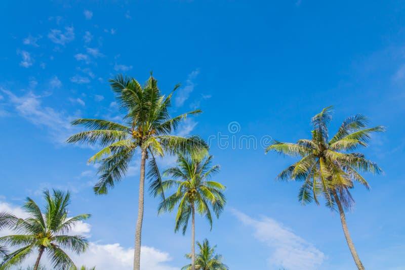 Cocco sopra cielo blu fotografie stock