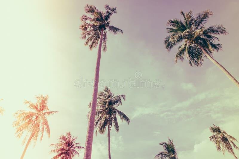 Cocco sopra cielo blu (Annata elaborata immagine filtrata fotografia stock