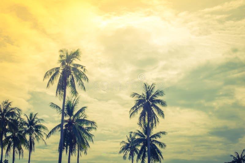 Cocco sopra cielo blu (Annata elaborata immagine filtrata fotografie stock libere da diritti