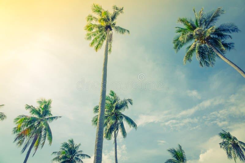 Cocco sopra cielo blu (Annata elaborata immagine filtrata fotografia stock libera da diritti