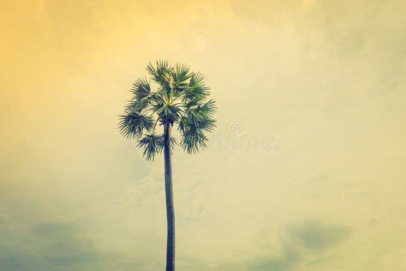Cocco sopra cielo blu (Annata elaborata immagine filtrata immagine stock