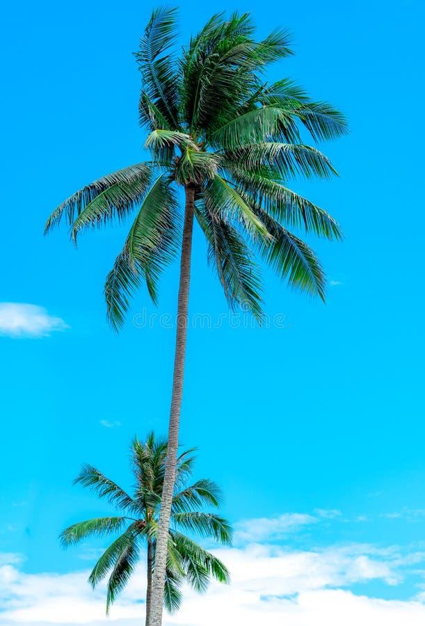 Cocco su cielo blu soleggiato e sulle nuvole bianche Estate e concetto della spiaggia di paradiso Palma tropicale della noce di c fotografie stock