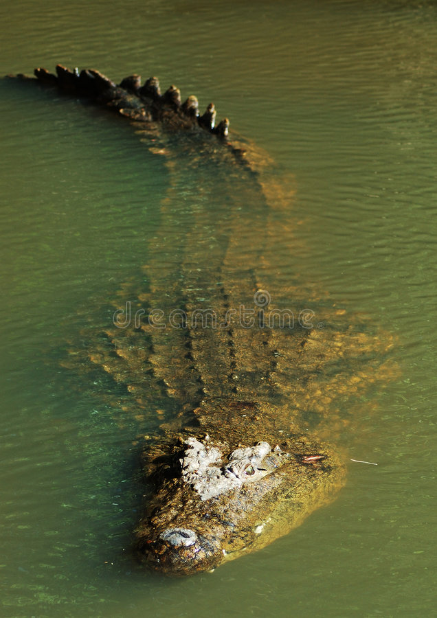 Coccodrillo #3 del Nilo fotografie stock libere da diritti
