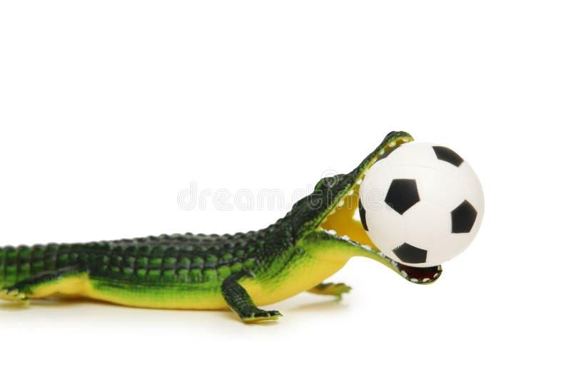 Coccodrillo con gioco del calcio immagini stock libere da diritti