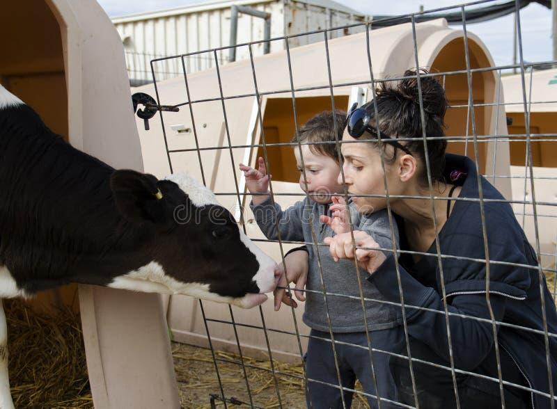Coccole del bambino e della madre un vitello fotografia stock