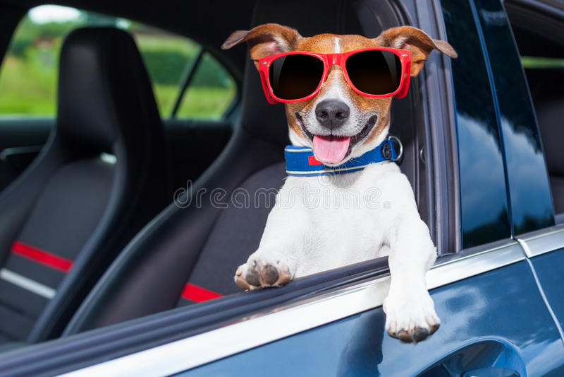 Coche de la ventana del perro fotos de archivo libres de regalías