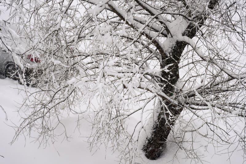 Coche debajo del árbol nevado imagen de archivo