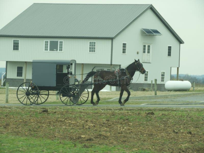 Cochecillo conducido caballo de Amish fotografía de archivo