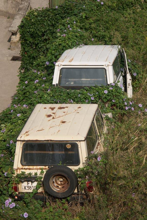 Coches Overgrown fotografía de archivo libre de regalías