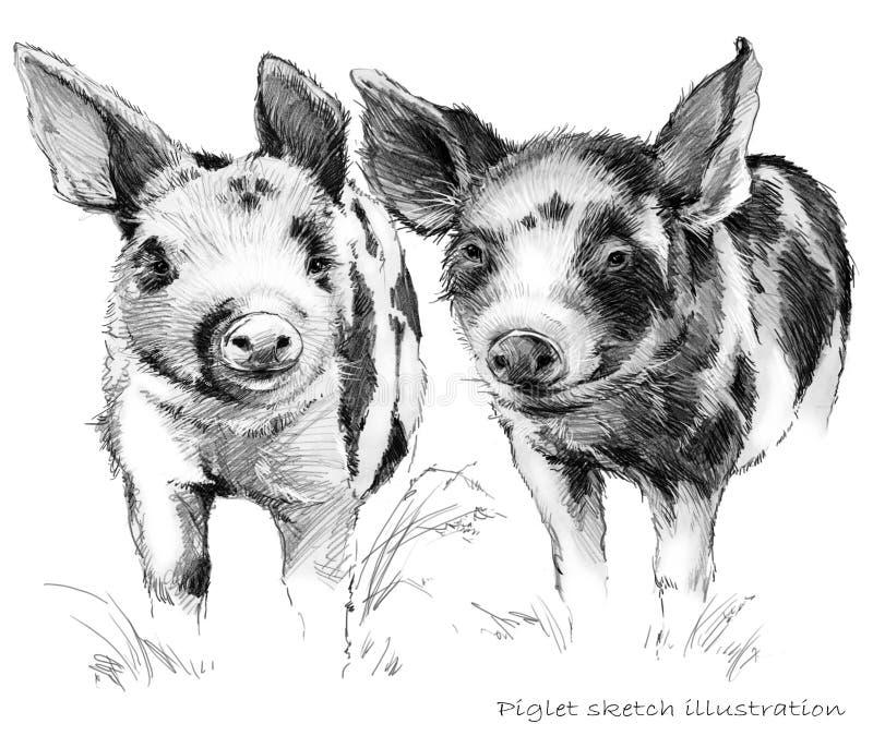 Cochinillo lindo Ejemplo del bosquejo del lápiz del cerdo stock de ilustración
