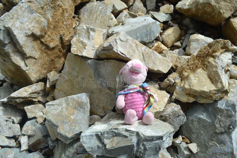 Cochinillo que presenta en las rocas foto de archivo