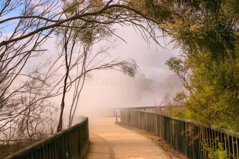 Cocido al vapor al vapor caliente en el parque de Kuirau, Rotorua, Nueva Zelanda foto de archivo libre de regalías