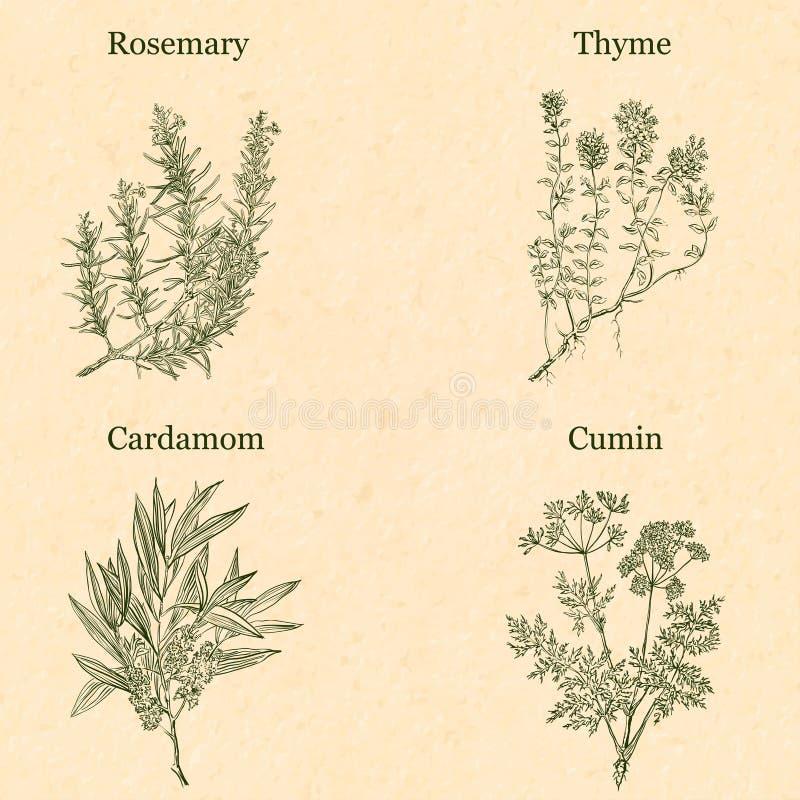 Cocinar las hierbas stock de ilustración